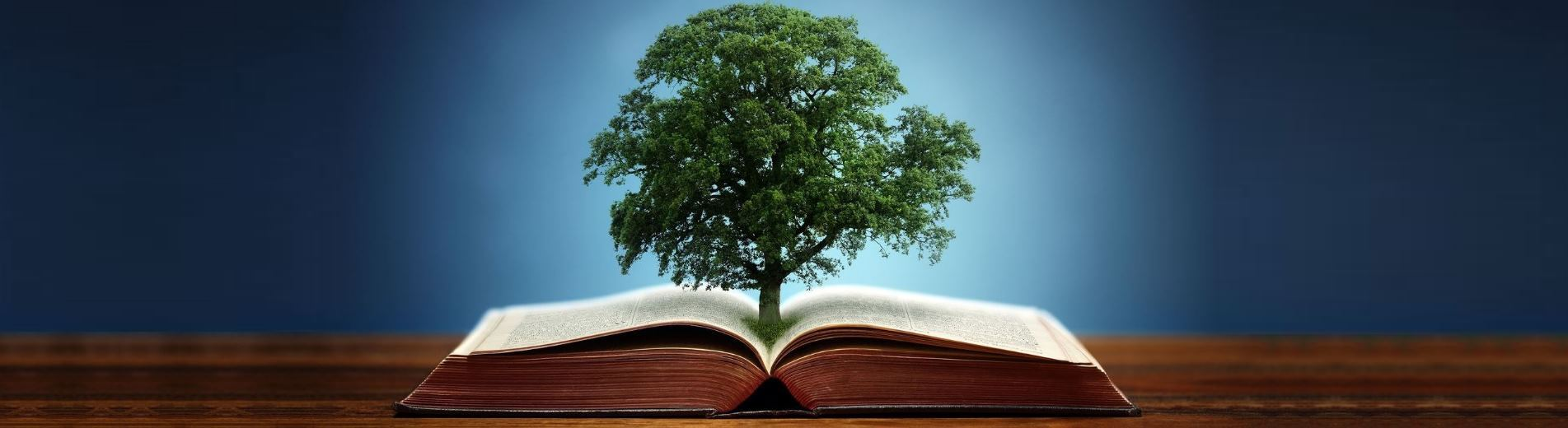 bigstock-Book-or-tree-of-knowledge-conc-79293445